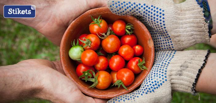 giardinaggio-pomodori-stiketsfamily